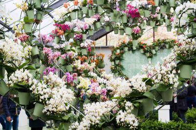 Orchids Garden House